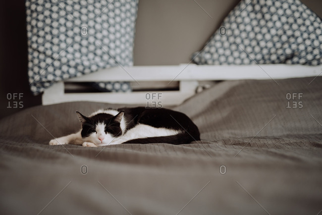 Black and white cat asleep on bed