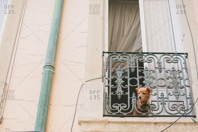 Dog looking out window in Portugal