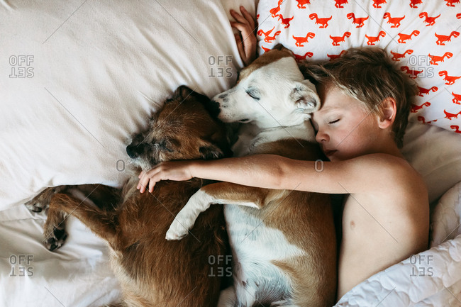 Boy in bed with two dogs