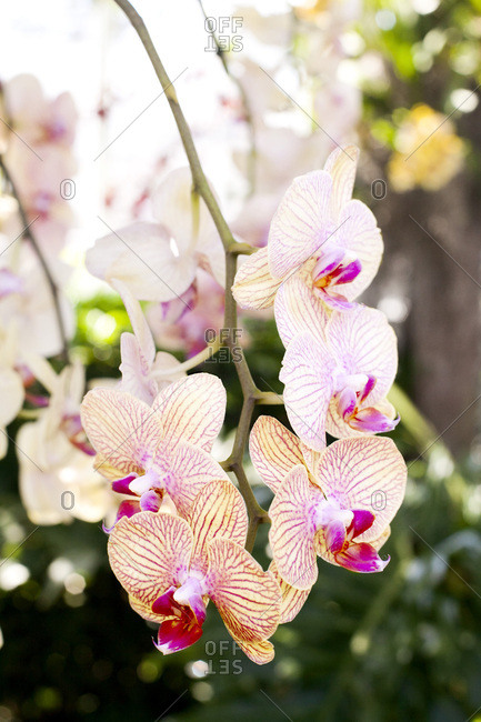Orchids in bloom outdoors