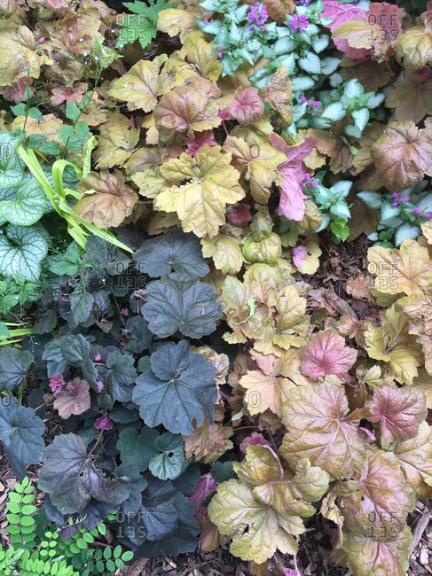 Variety of leafy plants in garden