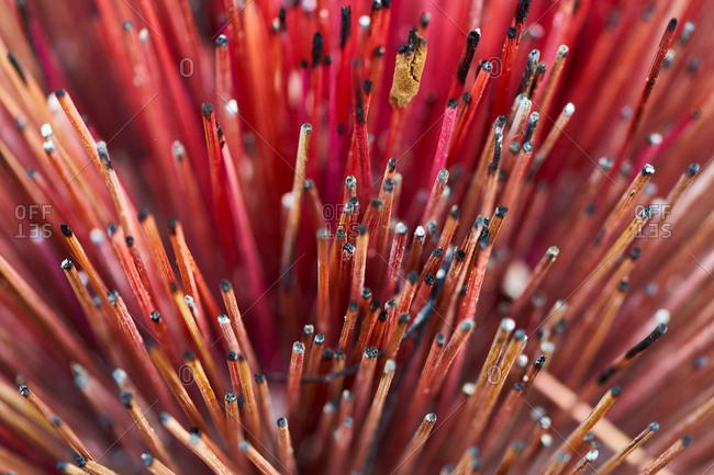 Burnt incense sticks - Royal Palace, Phnom Penh