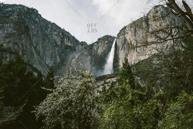 Yosemite mountain and greenery landscape