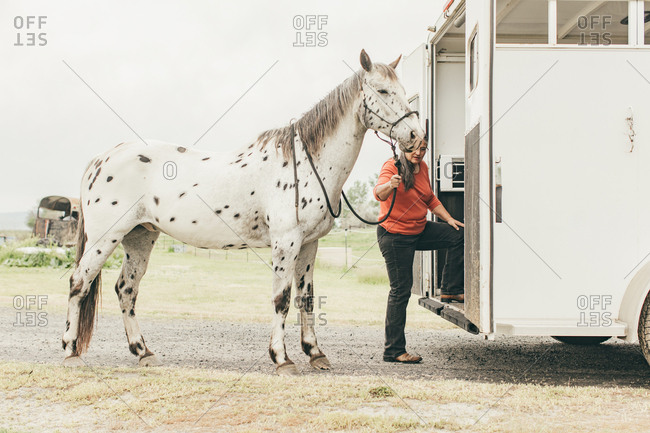 Woman walking spotted horse onto a trailer