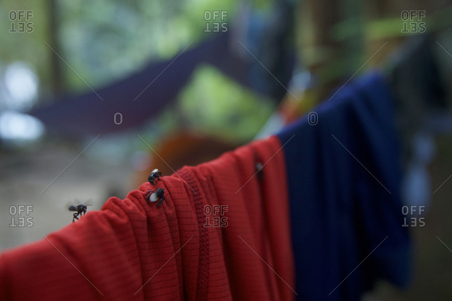 Insects land on clothes hanging in a camp in Gunung Palung National Park's pristine rain forest interior.