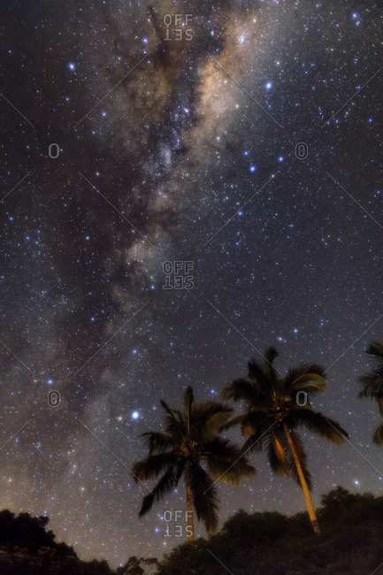 The Milky Way above coconut palms of Ilha Grande, Brazil.