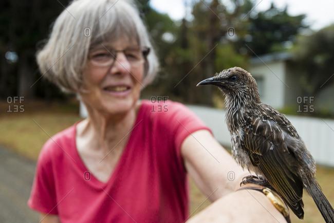 An elderly woman with a Wattlebird resting on her arm.