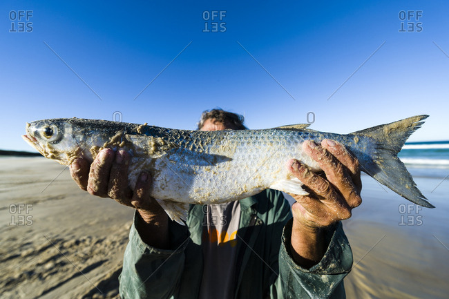 A fisherman proudly displays a Mullet he has caught.
