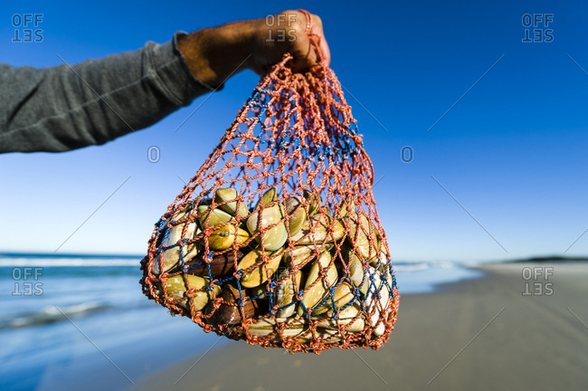 A woven bag carrying bi-valve shells called pipi harvested on a beach.