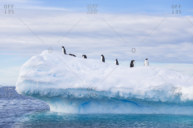 Penguins on top of an iceberg in Antarctica.