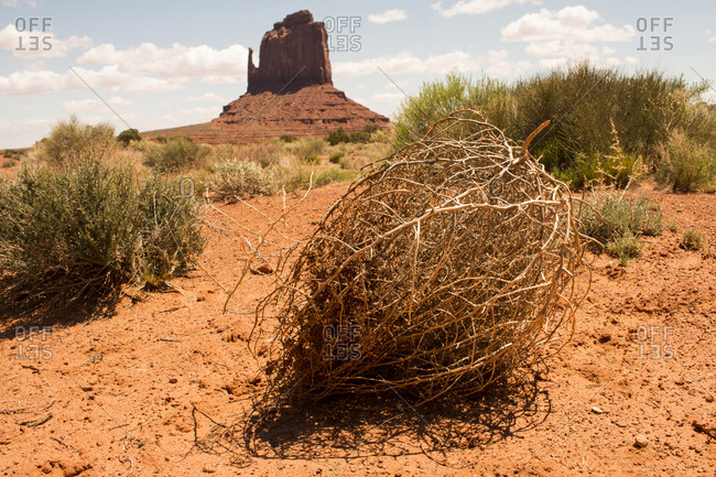 A tumbleweed at rest in front of the East Mitten Butte in Monument Valley.