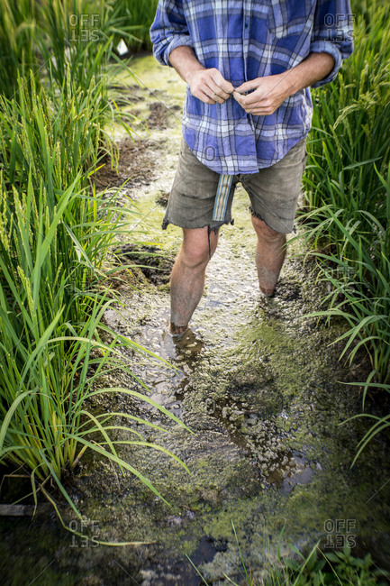 A rice paddy farmer stands in a muddy path in bare feet.