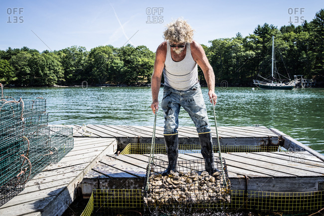 An oyster fisherman hauls a basket of oysters up from a holding pen in the river.