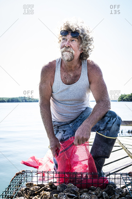 An oyster fisherman bags up oysters from a holding pen in the river.