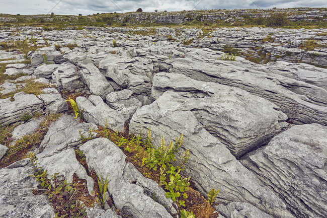 Patterns created by water erosion in limestone pavement.