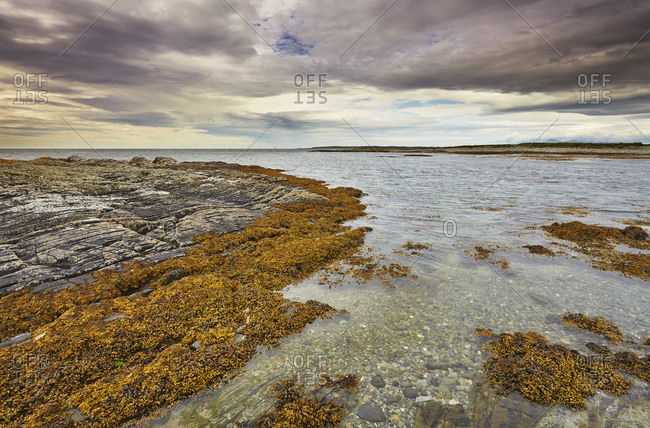 Shoreline near Ballyquintin Point, in the mouth of Strangford Lough.