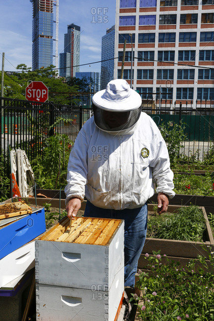 Queens, New York City - June 11, 2017: Beekeeper checking on beehives