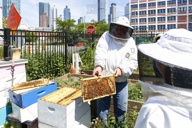Queens, New York City - June 11, 2017: Beekeepers checking on hive