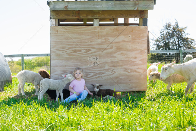 Girl setting among sheep flock