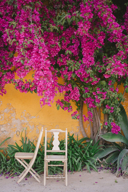 Flower vine covered wall - Portugal