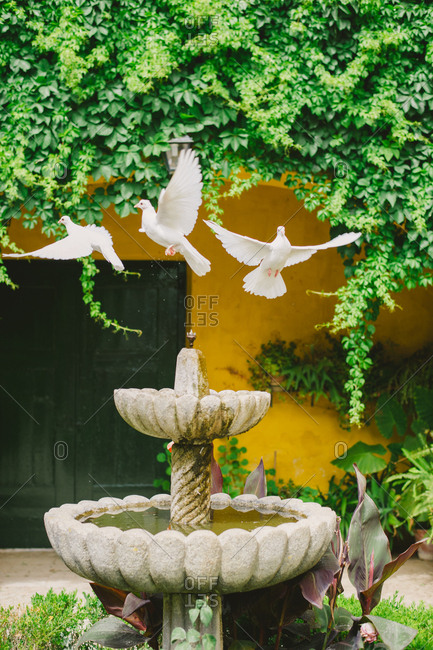 Birds flying from fountain - Portugal