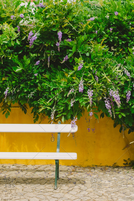Bench by wall with flowering bush