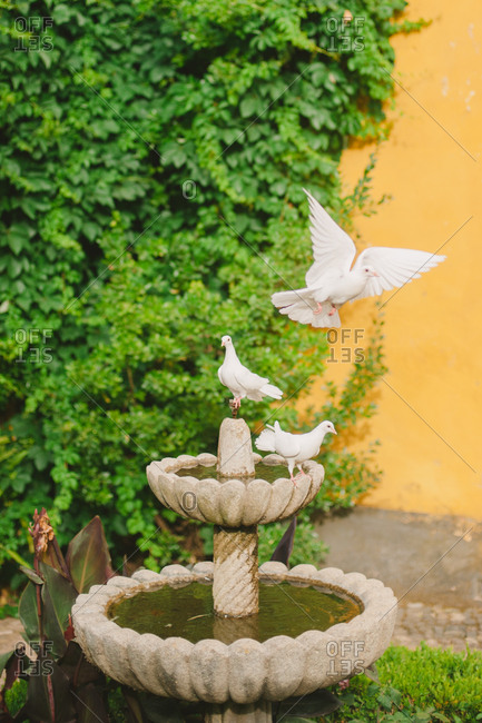 Doves flying from a fountain
