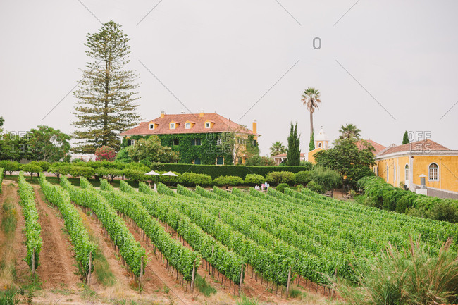 A wine estate in Portugal