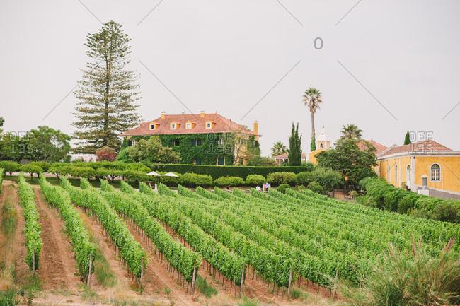 A wine estate in Portugal