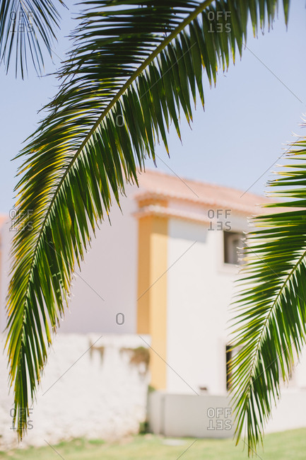 Palm tree near house in Portugal