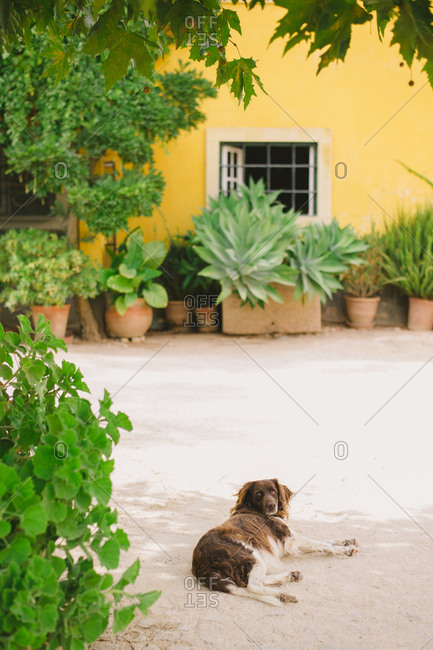 Dog laying in a courtyard - Portugal