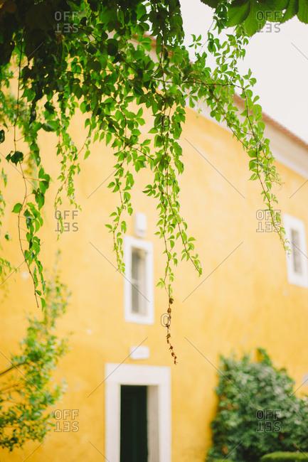 Vines near a Portuguese home