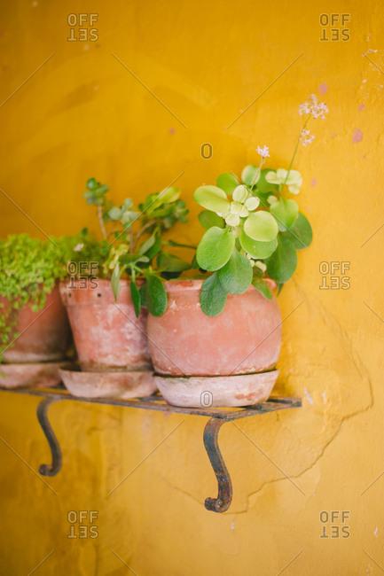Plants on a shelf on wall - Portugal