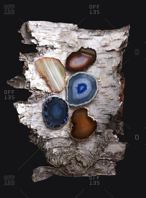 Mineral stone slices on bark