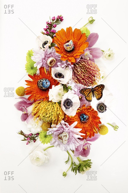 Butterflies and flowers on white background