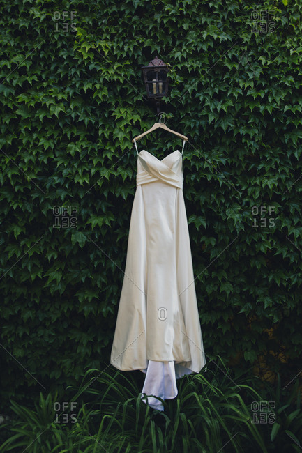 Wedding gown hanging on ivy-covered wall
