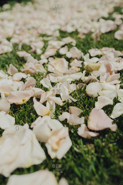 Rose petals scattered on grass
