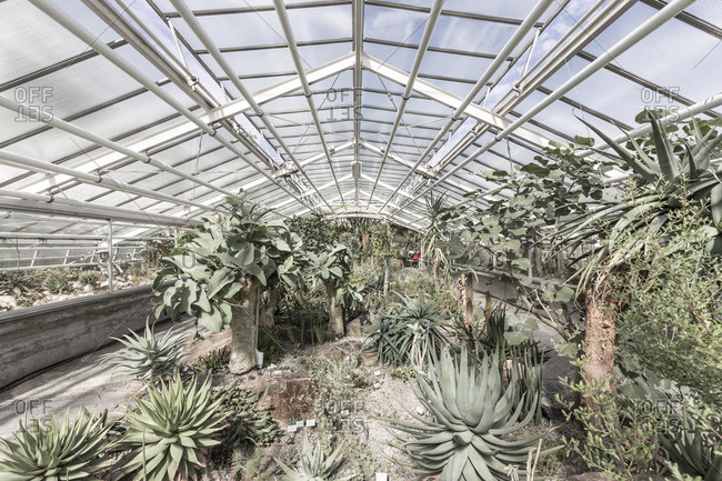 Dry climate plants at Berlin Botanical Garden