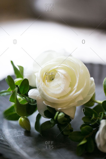 Close up of white boutonniere
