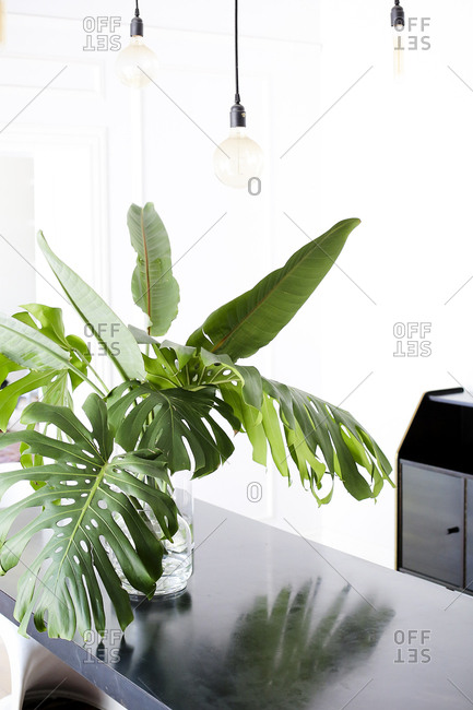 Dining room interior with large green leaves in a vase