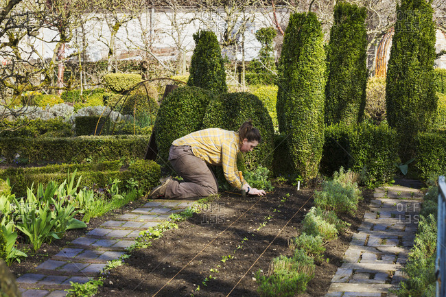 Woman planting seedlings in a bed of soil in the kitchen garden of a hotel