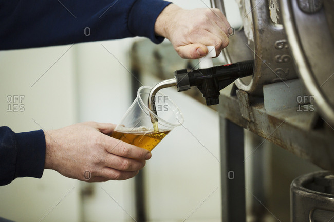 Man drawing foaming amber liquid, beer from a metal keg in a brewery for testing
