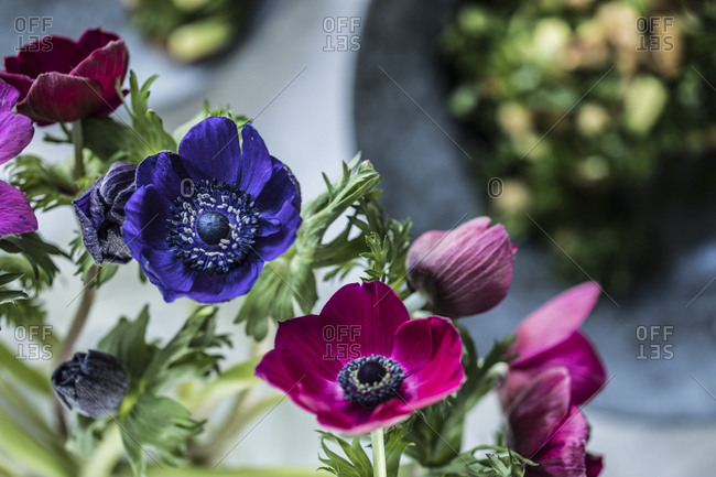 Close-up of blue and fuchsia anemone flowers near a bowl of food