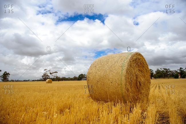 Australian pastoral scenery
