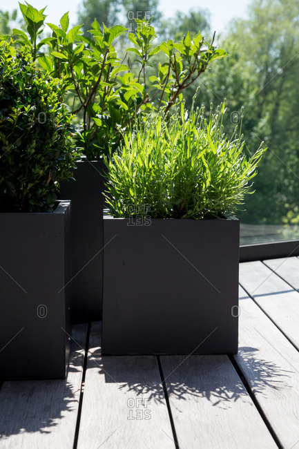 Close-up of a geometric planter and modern plants