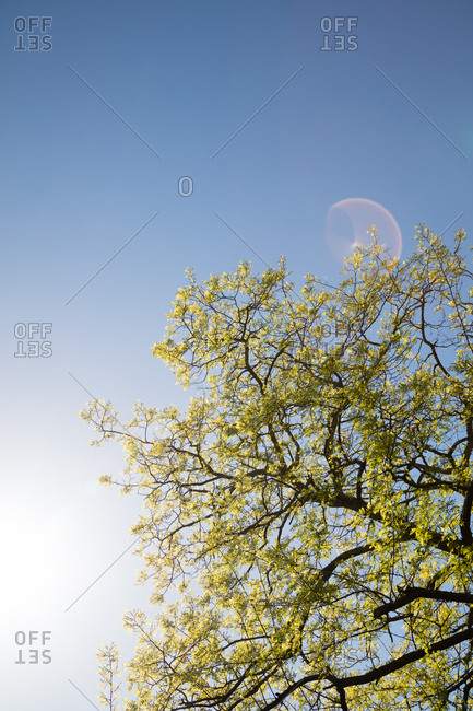 Tree branches against a blue cloudless sky