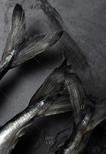 Close-up view on the mackerel fish