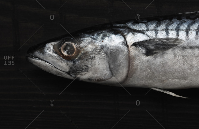 Close-up view on the raw mackerel fish