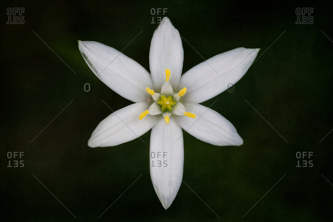 Six petal flower with yellow center