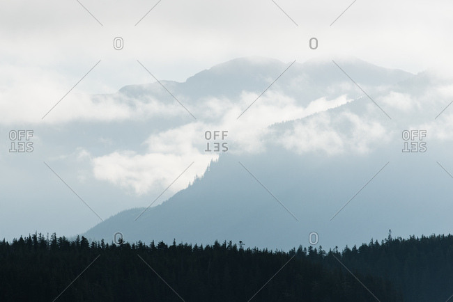 A row of evergreen trees with misty silhouettes of mountains in the background